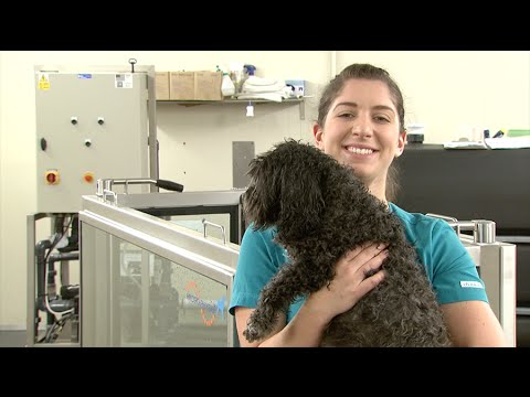 See your future in Veterinary Nursing