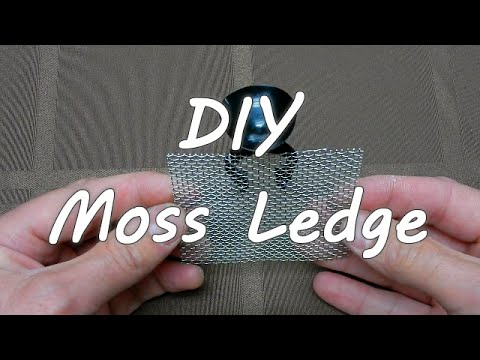 DIY Moss Ledge