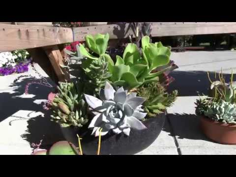 Tender Succulents: Part 7 - Mixed Succulent Bowls & Planters