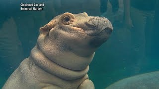 Meet the Cincinnati Zoo