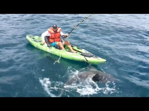 Fisherman on Kayak Dragged Into Water By Shark Will Make Your Heart Stop
