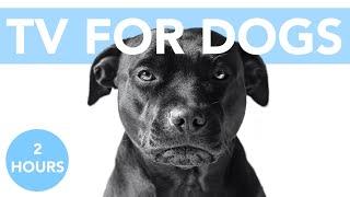 ¡TV para perros! Música relajante para perros que ayuda con la ansiedad.