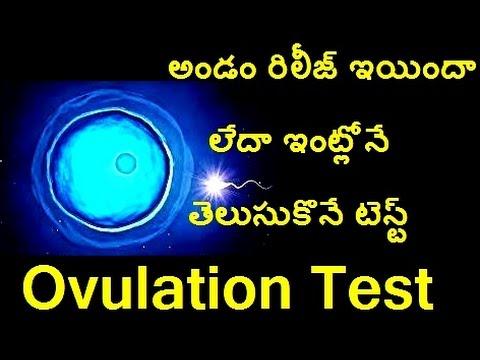ovulation test in telugu / sun media telugu