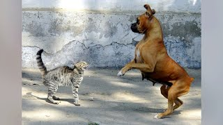 It's CATS'n DOGS time - Funniest ANIMAL CLIPS as always!