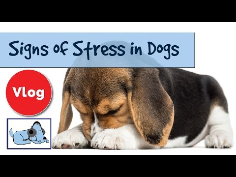 How to Tell if Your Dog is Stressed. Signs of Stress in Dogs. 🐶 #ANXVLOG02