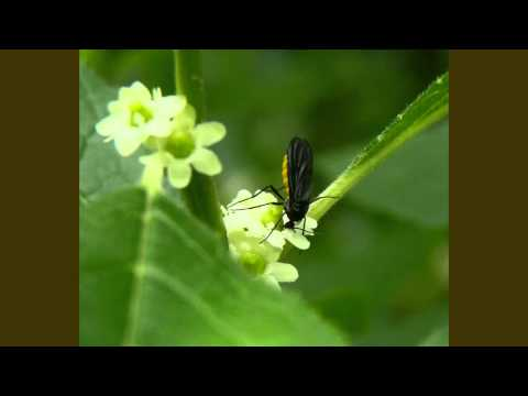 Dealing With Fungus Gnats