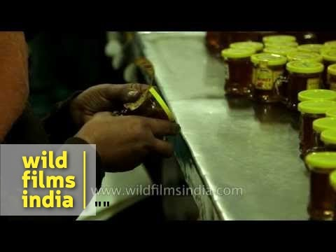 Honey being packed in small plastic containers - India