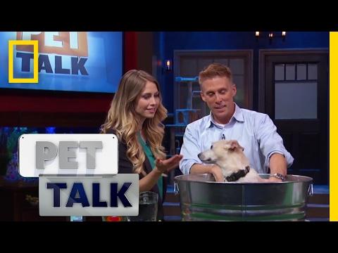 How To De-Skunk Your Dog | Pet Talk
