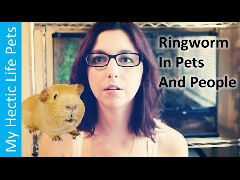 Ringworm, What Is It? Prevention And Treatments