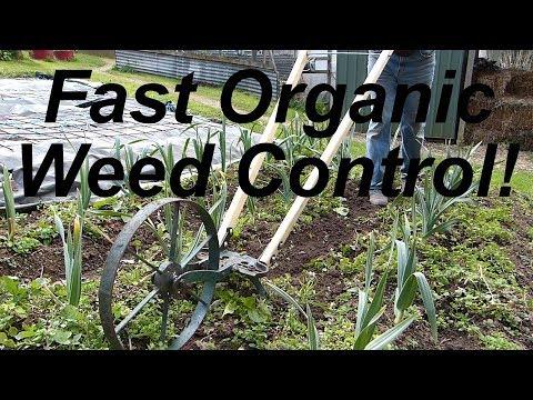 FAST organic WEED CONTROL  - wheel hoe revival!
