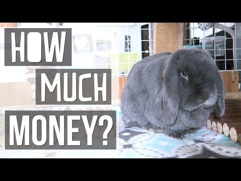 How Much Money I Spend On My Rabbits VLOG