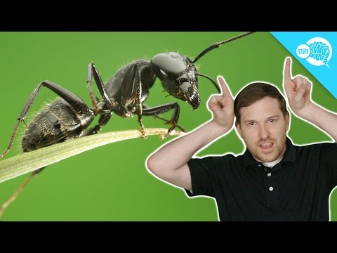 Are Ants Better Communicators Than You?