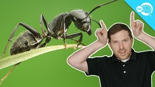 Are Ants Better Communicators Than You