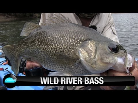 Catching Australian Bass on hardbody lures | We Flick Lure Fishing Videos