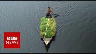 The Floating Farms of Bangladesh - BBC News