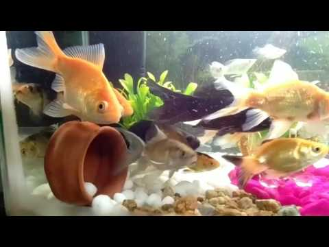 Fish tank decoration with stones