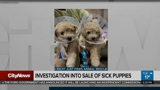 Sale of sick puppies being investigated by province
