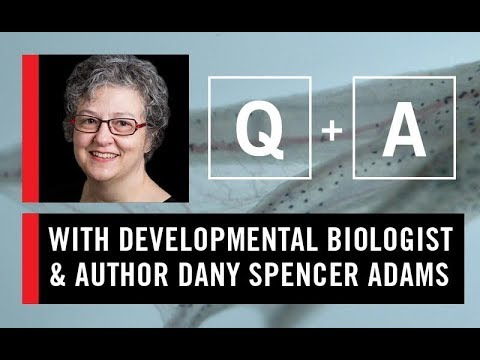 WS CONNECT Q & A with Dany Spencer Adams