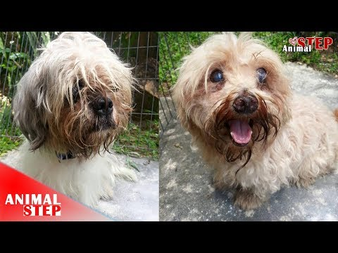 Dogs in Poor Health Being Dumped In Front of a School but Now Are Beautiful