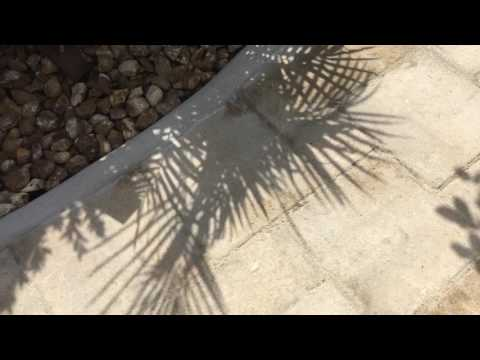 How not to seal patio paver joints
