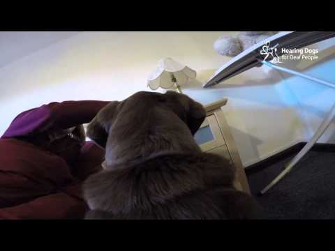 Dog Cam: How a hearing dog wakes a deaf person in the morning
