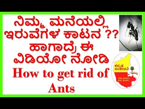 How to get rid of Ants Naturally...Kannada Sanjeevani