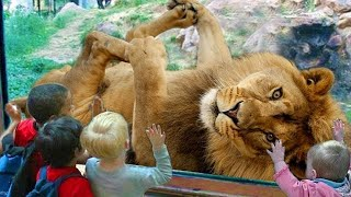Funny Babies And Animals At The Zoo - Funny Videos Animals