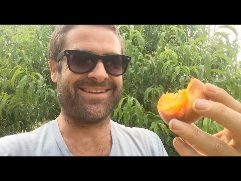 Ep174 - Stonehaven Desert Gold Peaches - One Year In The Ground