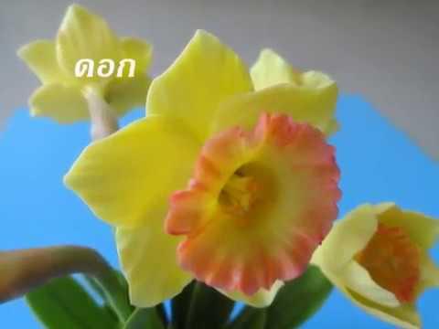 สาธิตการทำดอกดารารัตน์ (How to Make clay Flowers daffodils)