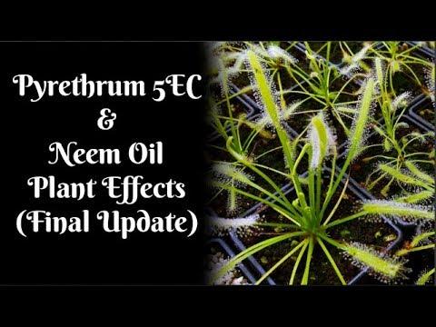 Pyrethrum 5EC &  Neem Oil Plant Effects (Final Update)