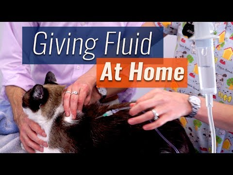 How to Give Subcutaneous Fluids At Home - Demonstration & Checklist