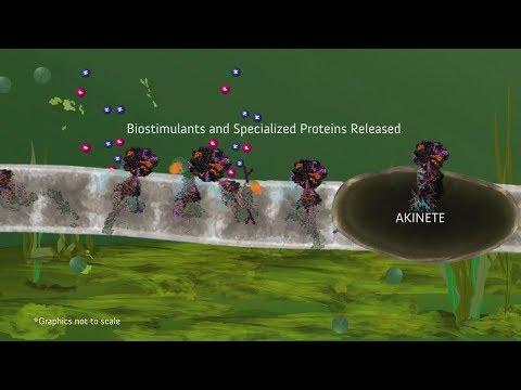 PondZilla Pro for Wastewater