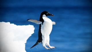 Funny Penguins 🐧 Penguins Fails [Funny Pets]