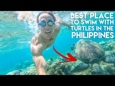 TURTLES and Beautiful Viewpoints at APO ISLAND - Philippines Travel Vlog Ep 14