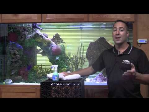 Fish Guy TV Aquarium Cleaning Tip