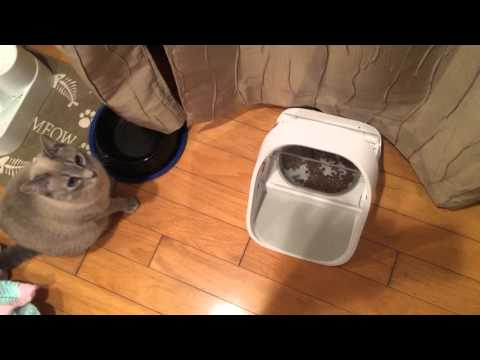 Sureflap Surefeed Microchip Feeder with my cats