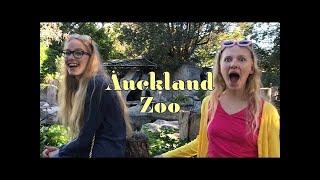 Teens visit Auckland Zoo | General Audience