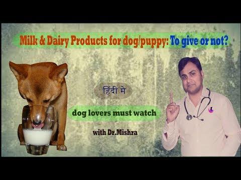 Why milk feeding is not good to puppy/dog? II Explained II dog and vet II Hindi