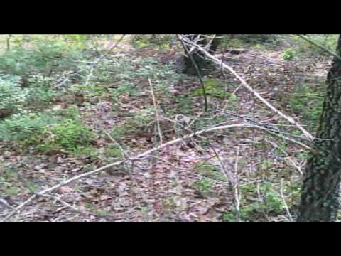 Camera Test For Youtube (Read Description)