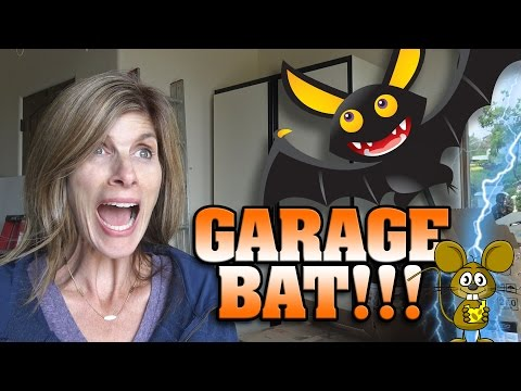 BAT IN OUR GARAGE!!! Plus RAT SHOCKER!