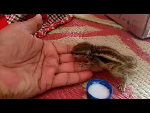 Squirrel feeding in india