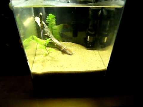 1.5 Gallon planted nano shrimp tank