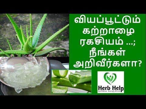 வியப்பூட்டும் கற்றாழை ரகசியம்...,;  Aloe vera gel benefits in Tamil   Herb Help