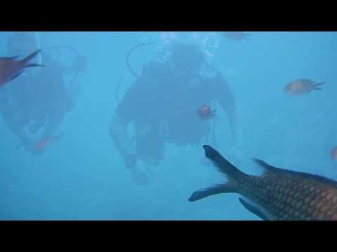 PADI Open Water Diver - Kos 2017