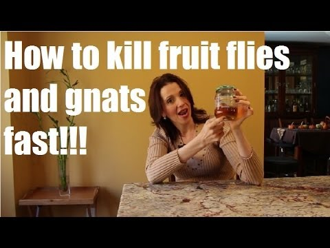 How to Kill Gnats and Fruit Flies Fast!