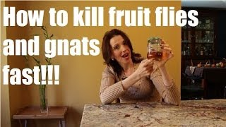 How To Kill Gnats And Fruit Flies Fast