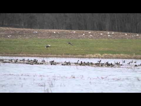 Otter Creek Wetland Flooded November 2011 - 682 Acres for Sale in Fulton County Illinois