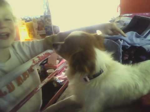 My Funny Talking Dog