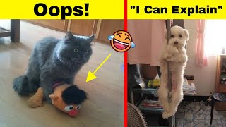Hilarious Times Naughty Pets Didn't Expect Someone To Be Home So Soon