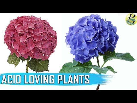ACID LOVING PLANTS: List of Plants | How to make Soil Acidic | Soil PH Testing
